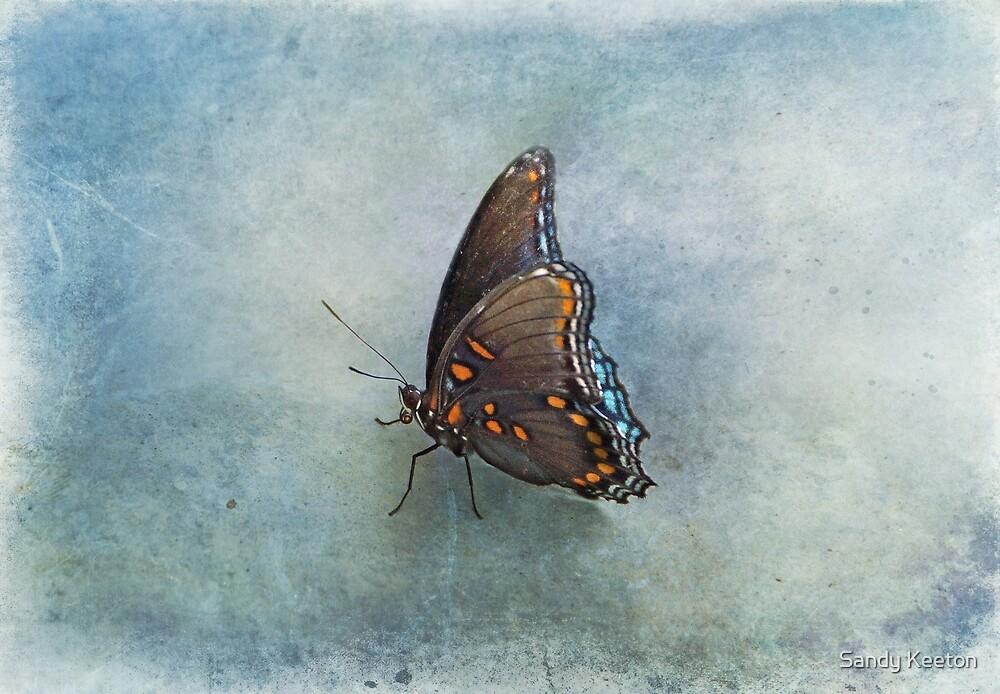 Butterfly on Blue by Sandy Keeton