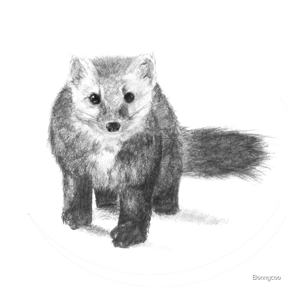 Pantalaimon the Pine Marten by Bonnycoo
