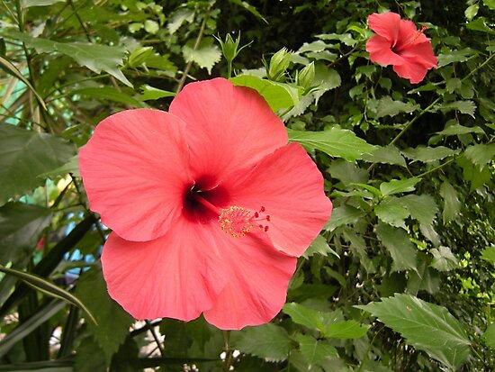 Flower garden by ttheott