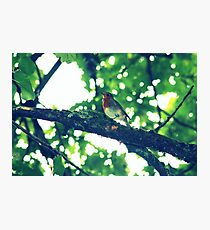 Robins call Photographic Print