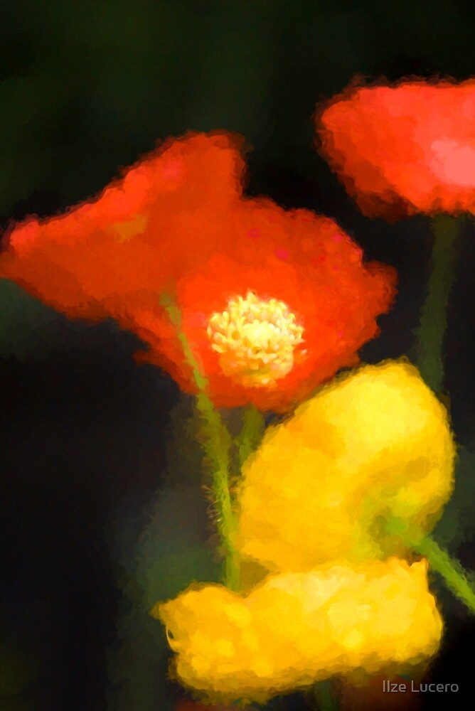 Painted Poppies by Ilze Lucero