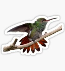 Rufous-tailed Hummingbird prints/apparel/home decor. Sticker