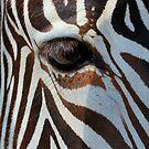 Eye of the Zebra by krishoupt
