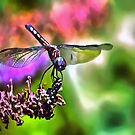 Dragonfly In Green and Blue by taiche