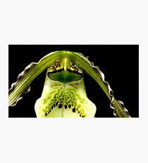 Captain Trips - Orchid Alien Discovery Photographic Print