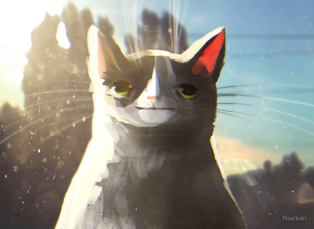 Kitten in sun by Niarkan
