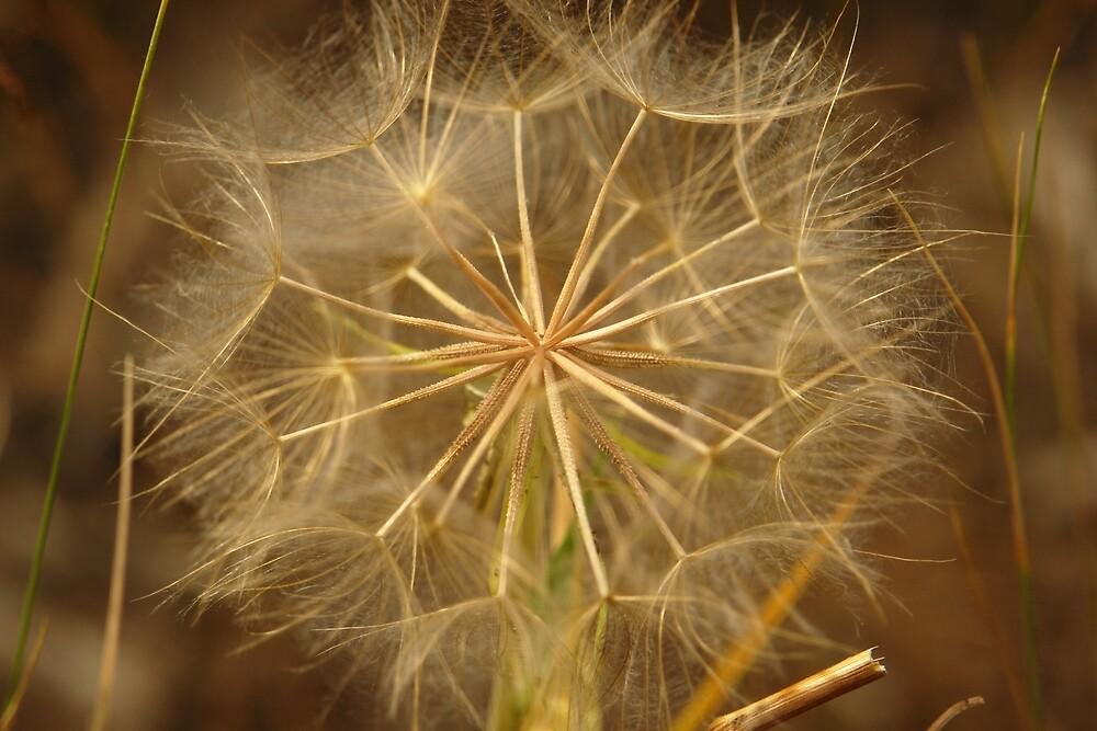 Dandelion Wishes by ArtByRosalind