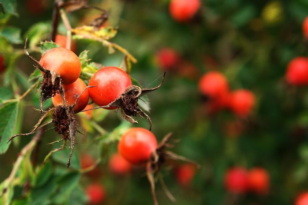 Red Rosehips by ArtByRosalind