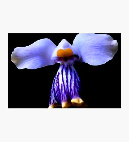Stripe - Orchid Alien Discovery Photographic Print