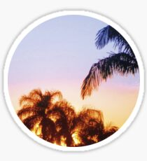 Sunset and Palm Trees Sticker