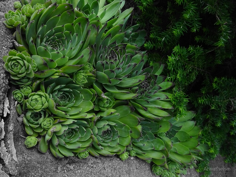 Succulent Patch by Annatheism