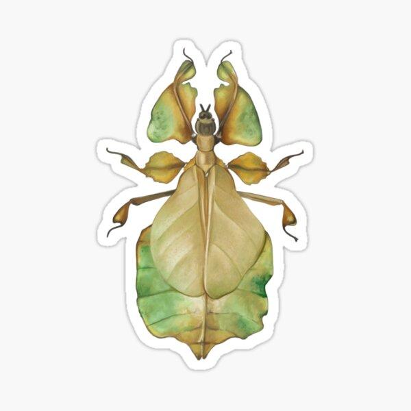 Leaf Bug Sticker
