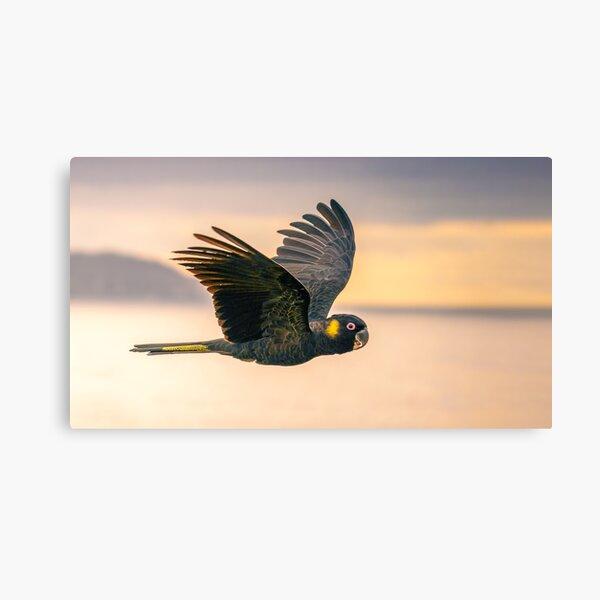 Yellow-tailed Black-cockatoo Canvas Print