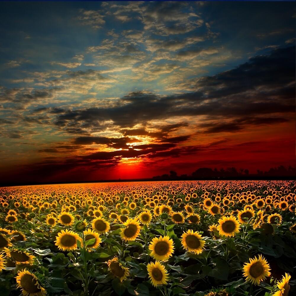 Suns Land by johnsonkarlena