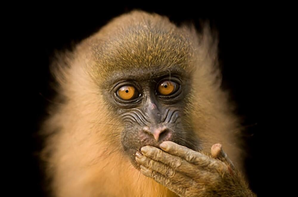 monkey hey by dsatria17