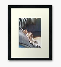 Sleeping kittens Framed Print