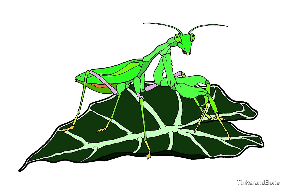 Green Asian Praying Mantis by TinkerandBone