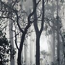 There's fog in the forest!! by Lozzar Landscape