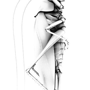 Grasshopper vertical by rispe
