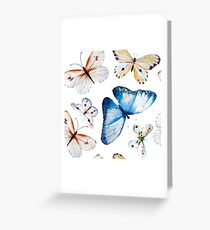 Butterflies multi colour in flight, pretty blue, orange, brown and white butterfly design, cute bold animal print design, classic statement fashion clothing, soft furnishings and home decor  Greeting Card