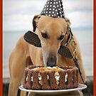 Happy Birthday by HoundExposure