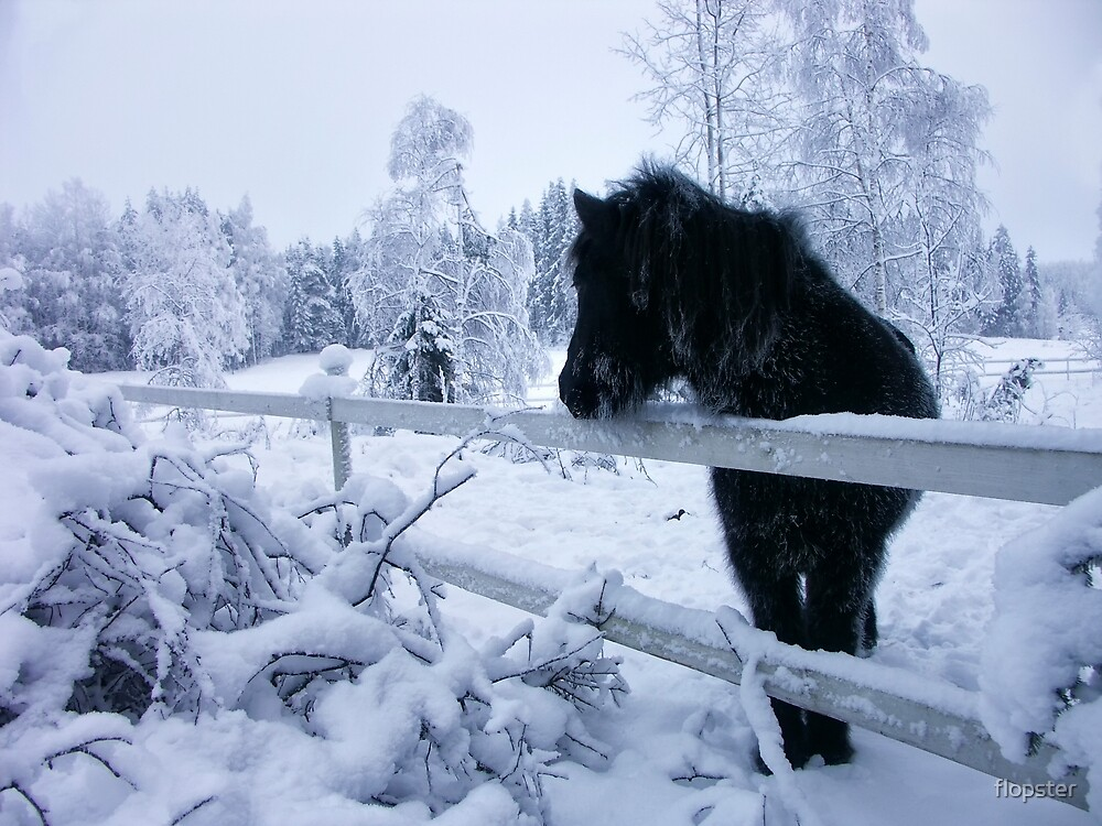 Horse in the snow by flopster