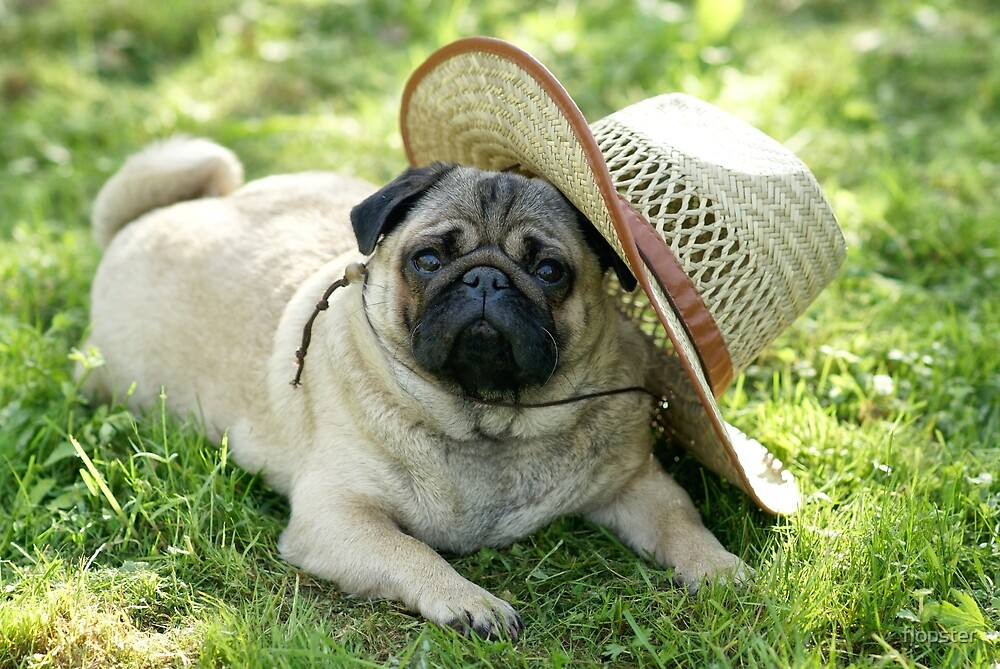 Pug with a hat by flopster