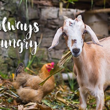 Always Hungry - hungry lil' goat  by wildlifestyleco