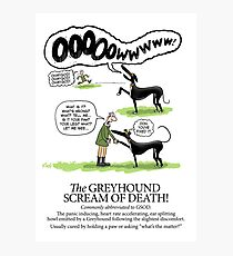 Greyhound Glossary: GSOD Photographic Print