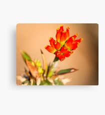 Red Bells Canvas Print