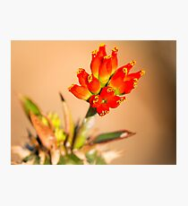 Red Bells Photographic Print