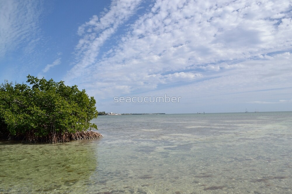 Key West Mangroves by seacucumber