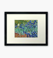 Vincent Van Gogh - Irises, 1889  Framed Print