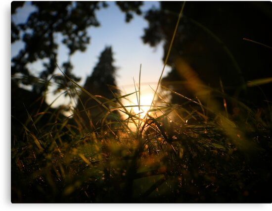 Epic Sunrise behind Grass by Siliyon