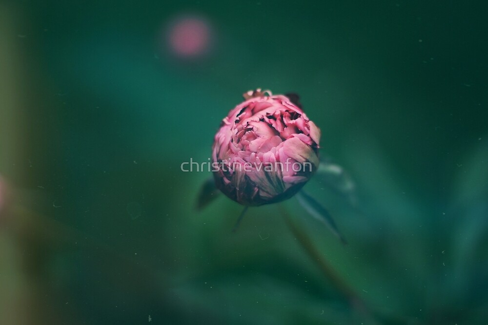 Pink Flower by christinevanfon