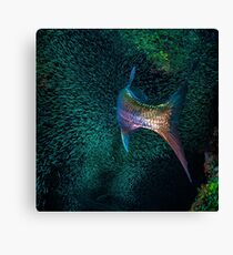 "Tarpon ""Broom Tail"" Canvas Print"