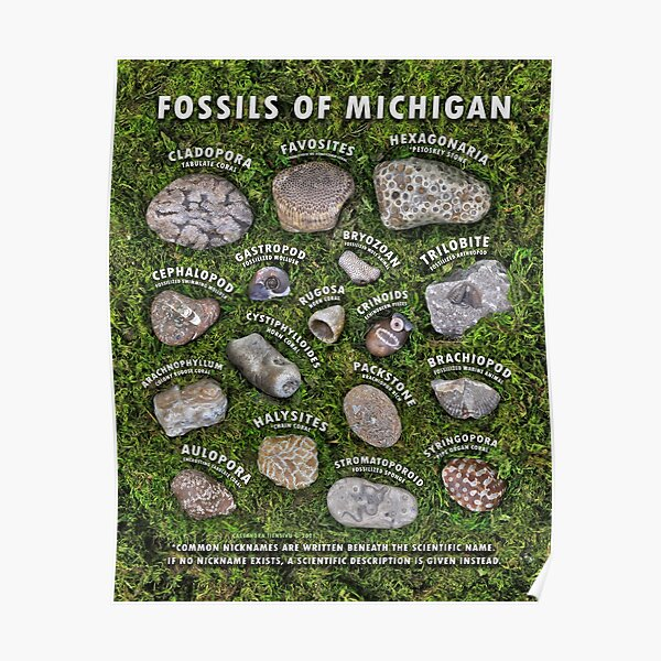 Common Fossils of Michigan Identification Guide Poster