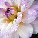 Flowers In Macro Calendar  by naturelover