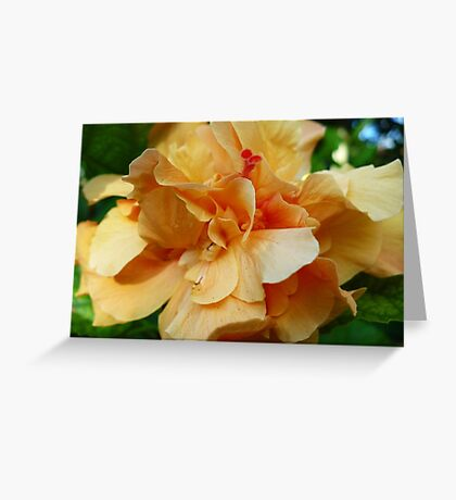 Double Peachy Hibiscus Greeting Card
