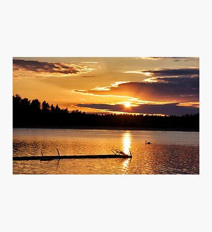 Golden swan Photographic Print