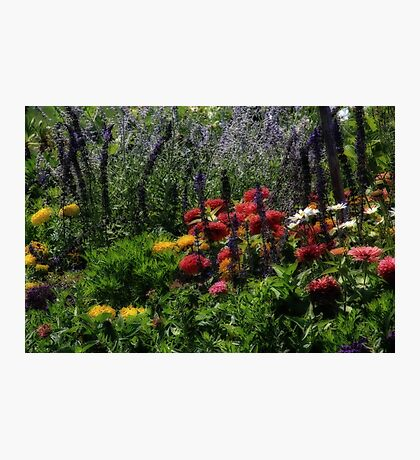 Dreamy Floral Photographic Print