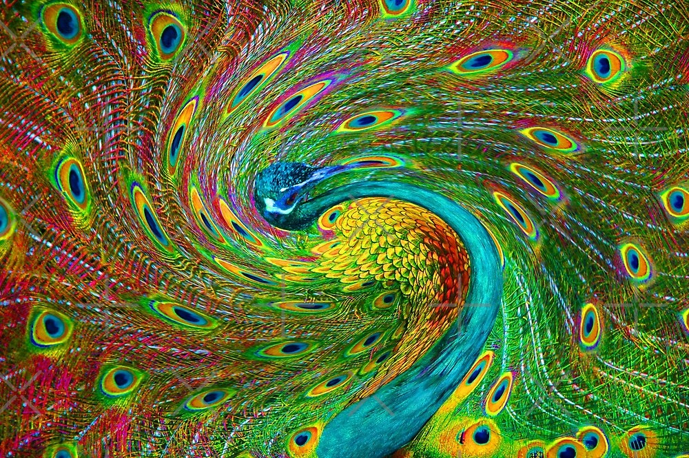 Twisted Peacock by christiane
