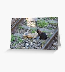 cat on the rails Greeting Card