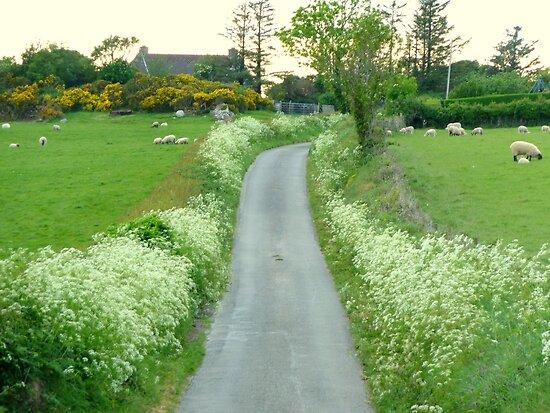 Sheep May Safely Graze by Fara