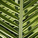 Green Lines, Angles and Light by christiane