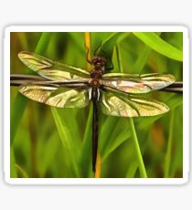 Dragonfly In Brown And Yellow Sticker