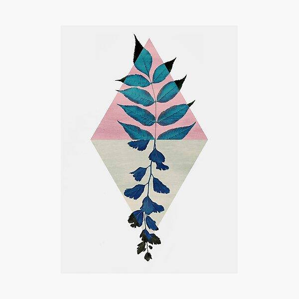 Geometry and Nature I Photographic Print