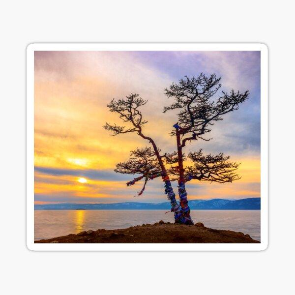 Baikal pine Sticker