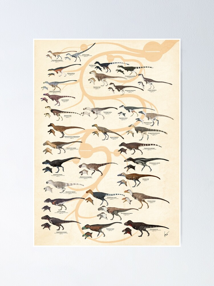 Alternate view of Tyrannosauroid Dinosaurs Poster