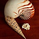 Shells of the Pacific........! by Roy  Massicks